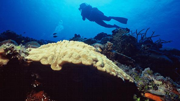 Locais de mergulho em Cuba
